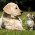 puppy kitten
