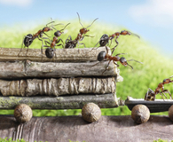 Learning how to eliminate ants without an exterminator