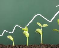 Business growth:new life growing before blackboard