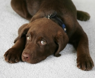 Using the best pet stain removers on stained carpet