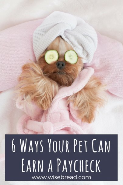 6 Ways Your Pet Can Earn a Paycheck