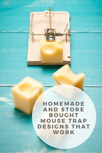 Homemade and Store Bought Mouse Trap Designs That Work