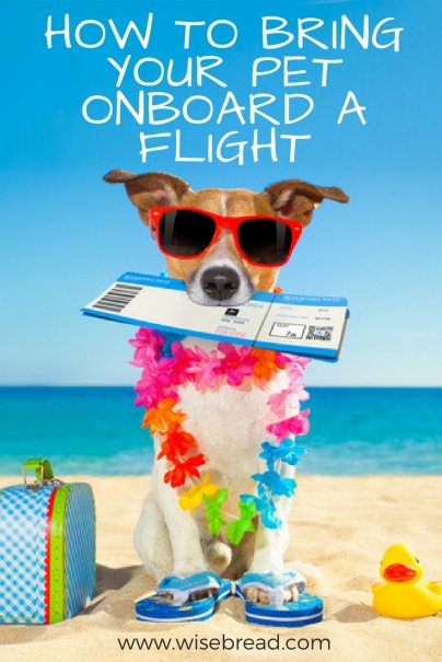 How to Bring Your Pet Onboard a Flight