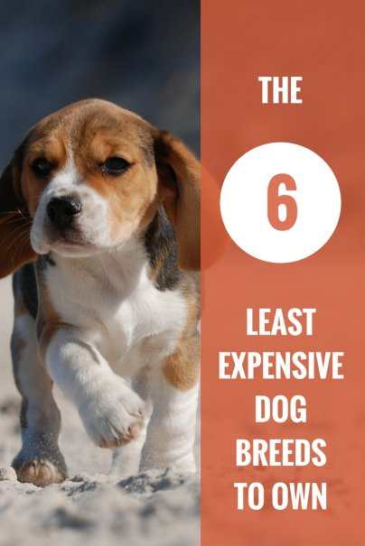 Least Expensive Small Dog Breeds
