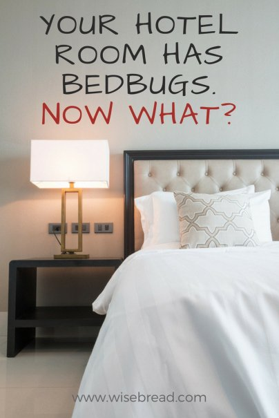 your hotel room has bedbugs  now what