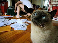 cat and taxes