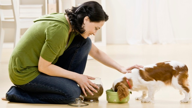 Best Money Tips: Save Money on Pet Expenses