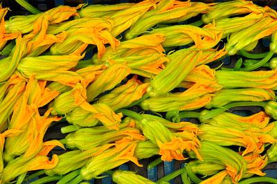 lots of zuchinni flowers