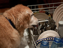Dog and dishwasher