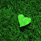 heart leaf on grass