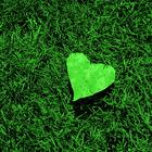 heart leaf on grass