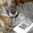 dog with Kindle