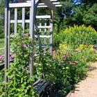 Bench in herb garden