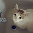 Cat in tub