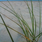 Grass sprouting in empty sand