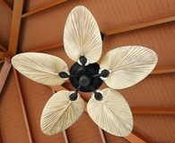 The best ceiling fans