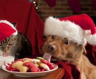 Learning which holiday pet dangers to avoid this year