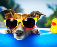 Keeping pets cool during a heat wave