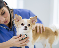 Learning ways to lower your vet bills