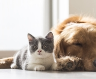Learning reasons to include pets in your will