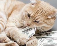 learning money lessons from your cat and dog