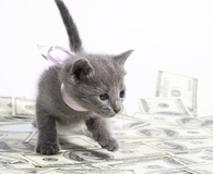 Learning you can buy a kitten and more for $5,000