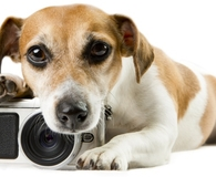 Puppy using the best pet cameras