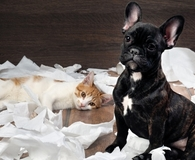 Puppy and kitten using the five best paper napkins