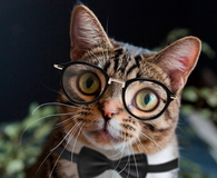 Scientist gentleman cat with glasses