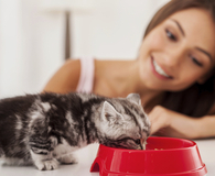 Woman feeding her cat with the best cat food available