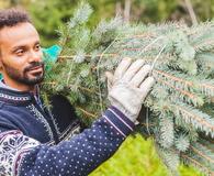Young Man Bringing Home a Christmas tree
