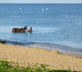 Horse bathing in the ocean