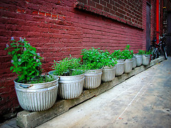 urban alley herb garden