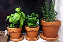 Window Sill Herb Garden 2