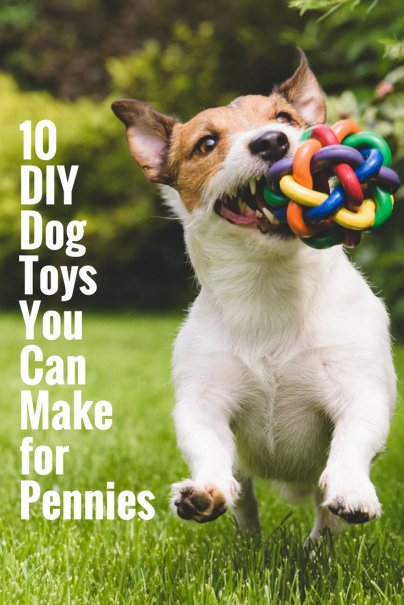 10 DIY Dog Toys You Can Make for Pennies