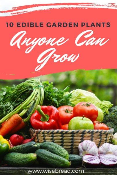 10 Edible Garden Plants Anyone Can Grow