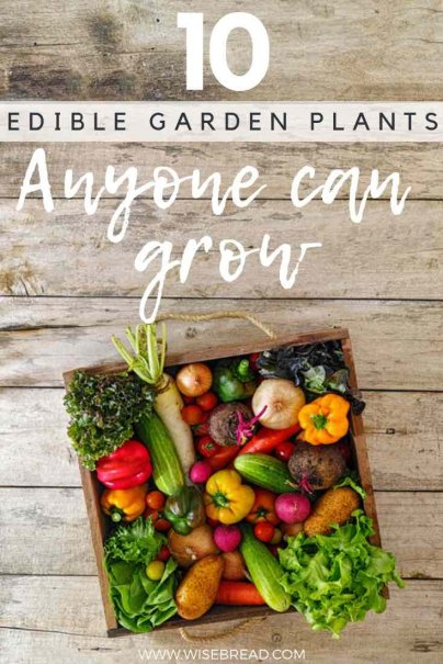 Want to know how to grow your own edible garden plants? We've got the best tips to turn your yards into a food haven. From lettuces, to beets, eggplant and more, these are the 10 best vegetables (and herbs) that anyone can grow! | #vegetablegarden #homegarden #greenliving #greenthumb