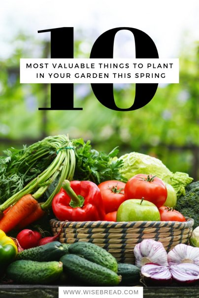 10 Most Valuable Things to Plant in Your Garden This Spring
