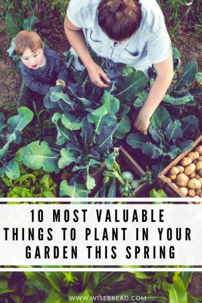 Want to know what vegetables to plant in spring? We've got the ultimate gardening tips for you, with the 10 most valuable things to plant in your garden! You'll be saving money, and eating healthier with your own natural grown vegetables! | #seasonalfoods #vegetablegarden #healthyeating