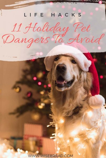 With Christmas around the corner, there are many common holiday dangers that can put your pet at risk - such as christmas decorations, hazardous holiday plants, lighting, cables, candles, food, snow globes and more ! To keep your cats and dogs safe, healthy and out of hospital, these are 11 things you and your furry friends should avoid! | #petdangers #christmas #pets #lifehacks