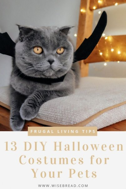 Want a cool halloween costume for your pet? We've got 13 great DIY costumes for your furry friends! | #petcostume #pets #DIY #halloween