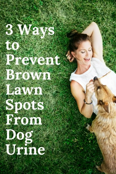 3 Ways to Prevent Brown Lawn Spots From Dog Urine