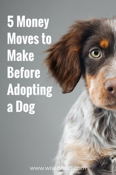 5 Money Moves to Make Before Adopting a Dog
