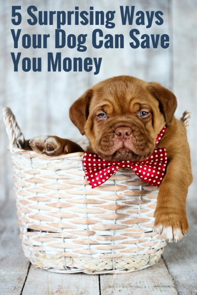 5 Surprising Ways Your Dog Can Save You Money