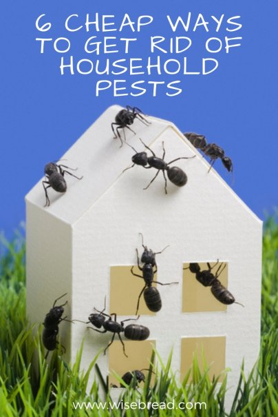 6 Cheap Ways to Get Rid of Household Pests