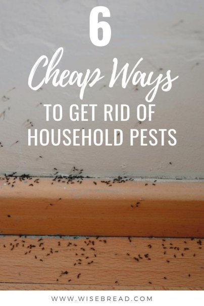 Have a pest problem? It's time to take control — pest control. From vinegar spray, to homemade bait, heres how to rid your house of unwanted visitors the DIY way, try the following cheap and effective techniques! | #housekeeping #frugalliving #DIY