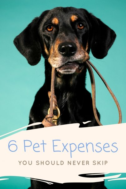 6 Pet Expenses You Should Never Skip