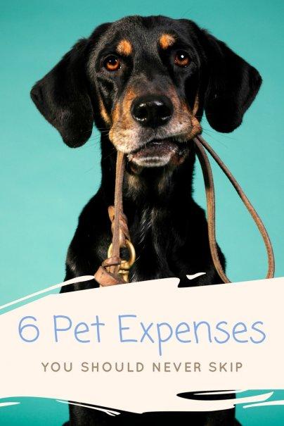 6 Pet Expenses You Should Never Skip