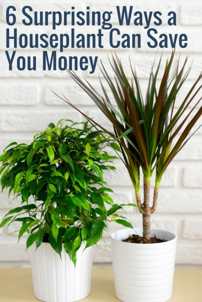 6 Surprising Ways a Houseplant Can Save You Money