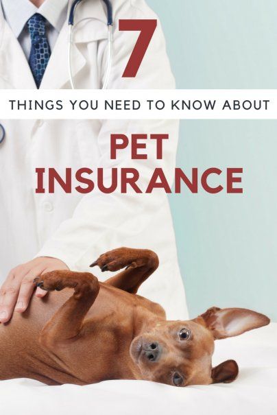 7 Things You Need to Know About Pet Insurance